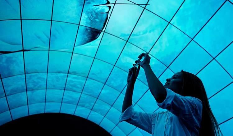 LG OLED tunnel IFA 2017