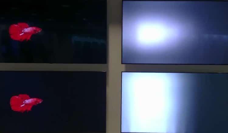 Full Array Local Dimming vs Edge LED Dimming [video